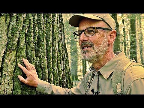 Das Geheime Leben Der Baume Trailer Hd Youtube