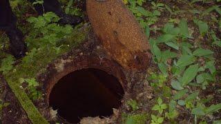 Истории на ночь № 1|Бункер в лесу