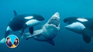 碰到就玩完了,世界上最可怕的十大海洋生物 | 老高與小茉 Mr & Mrs Gao