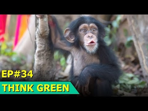 Ashdown Forest Cleanup | Stonehenge Tunnel | Radioactive Wast Report | Think Green : Episode 34