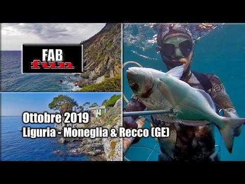 Pesca Sub | Liguria, Moneglia E Recco: Pesci Estivi D'ottobre | Spearfishing, Chasse Sous-marine