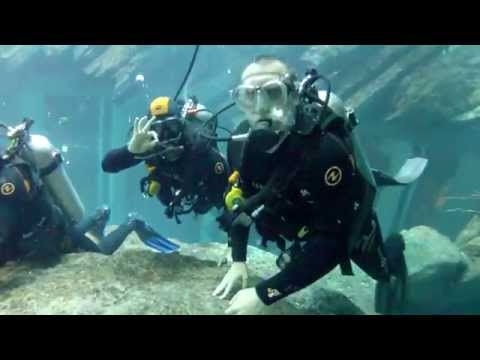 SCUBA diving with sharks at the Dubai Mall!