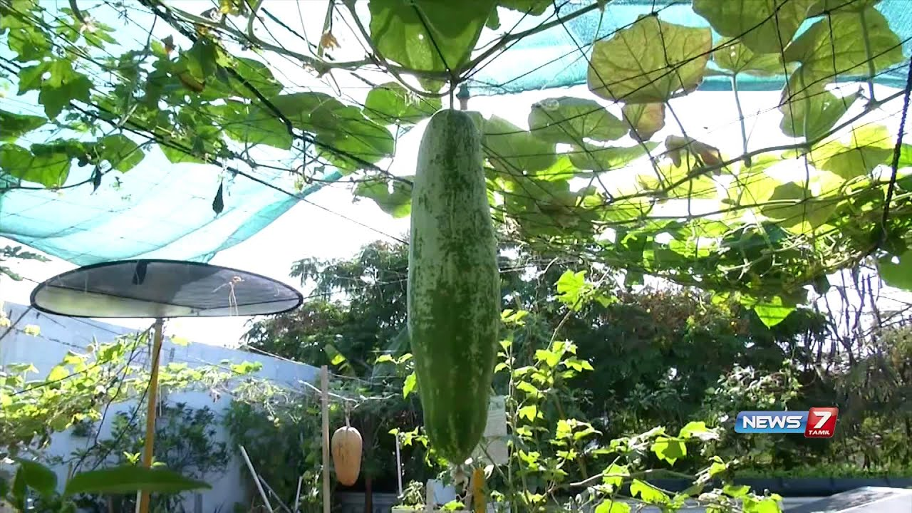 Grow Creeper Amp Climber Plants On Your Terrace Garden