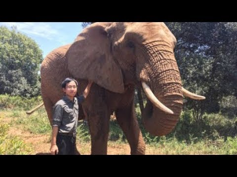 09/05/2018: China & Angola Promote Ties   How An Undercover Chinese Ivory Dealer Became A Hero