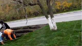 Трава в рулонах очень дорогая(12 октября 2012 года. Вдоль всего Соловьиного проезда снимают плодородный слой почвы. Чтобы свято место не..., 2012-10-12T12:42:39.000Z)