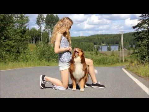 Dog tricks by Australian Shepherd Emmi