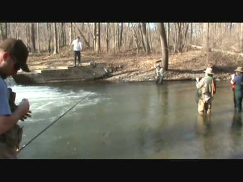 Finger lakes video naples creek monster rainbow trout for Finger lakes fishing report
