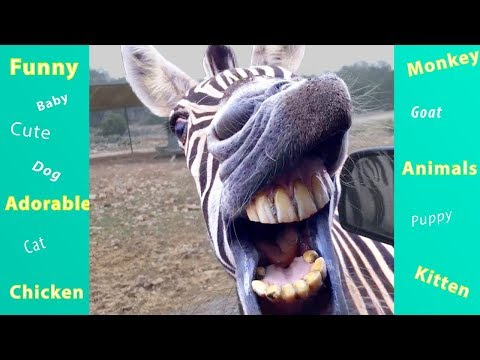TRY NOT TO LAUGH   BAD DAY WATCH THESE FUNNY ANIMALS!