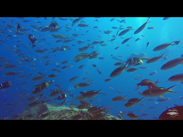 Reefs full of life in Loreto, BCS, Mexico.