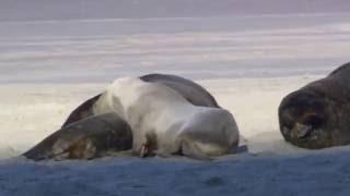 короткометражный фильм о животных
