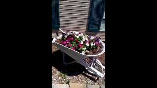 Antique Wheelbarrow Planter