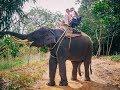 Elefanten reiten in Thailand | Insel Trip