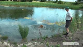 Gundog Training Water Work With Tony Price Professional Gun Dog Trainer Part One