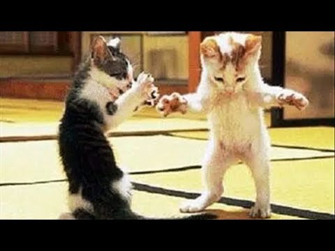 TOP Funny Cats and Dogs Dancing and Singing - Funny animals