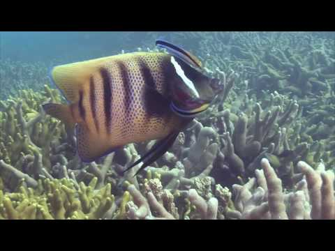 Most Amazing Diving In Yap Island , Micronesia - Remastered