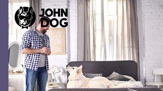 Jak oduczyć psa spania w łóżku? – TRENING – John Dog