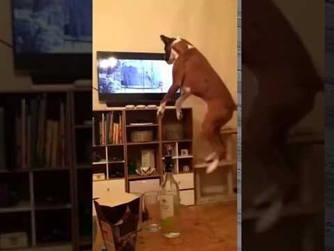 dog jumping to John Lewis advert