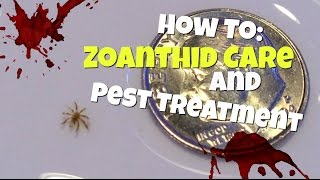 how to zoanthid care and pest treatment