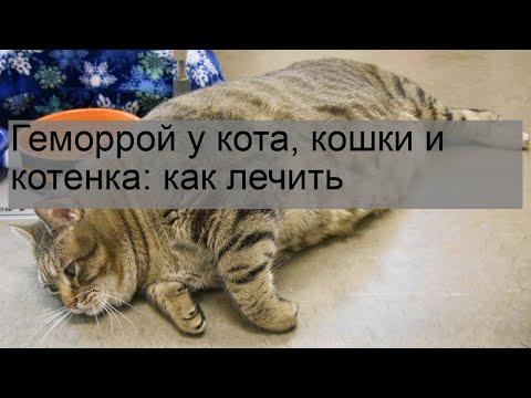 Геморрой у кота, кошки и котенка: как лечить