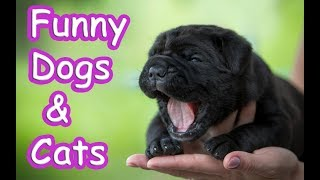 Funny Dog and Cat |  Funny Animals Fails Compilation 2019 - TRY NOT TO LAUGH