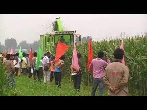 4QZ 2400 corn silage making machine, napier grass harvesting machine