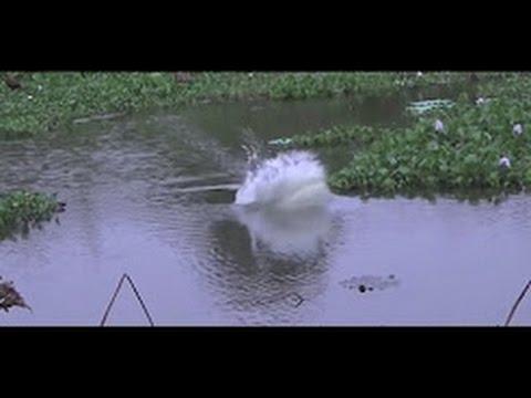 WOWW... Inilah SPOT Tersembunyi Mancing INDUKAN Ikan Gabus Dan Tomang Disarangnya