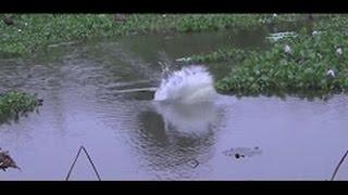 Gambar cover WOWW... Inilah SPOT tersembunyi mancing INDUKAN ikan gabus dan tomang disarangnya