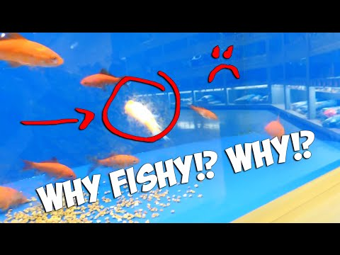 Vlog dead fish at the pet store youtube for Pet stores that sell fish