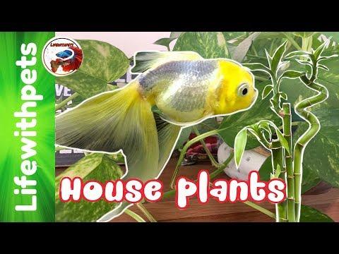 House Plants In Aquariums. (Sad News Update)