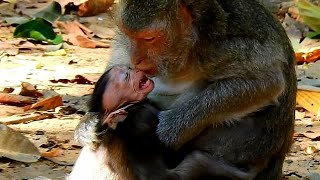 Download lagu BABY MONKEY JINX WAS TORTURED TO WEAN MILK, MOM JADE FIGHTS HER TILL RED FACE.