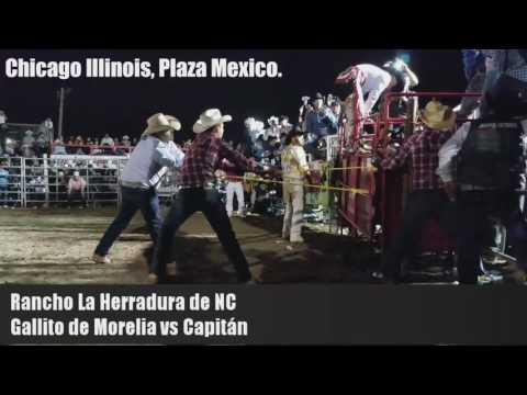 Gallito de Morelia vs Capitán de Rancho la Herradura de NC.