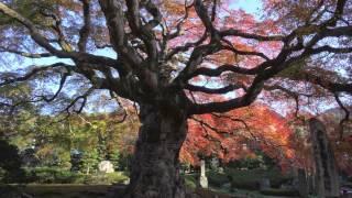 埼玉の紅葉の寺を訪ねて 〜金泉寺・西善寺・能仁寺〜