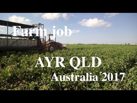 AYR QLD Farm job 2017 at SilverLink