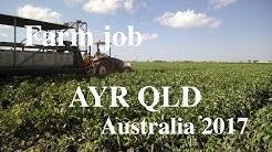 AYR QLD Farm job 2017 at SilverLink