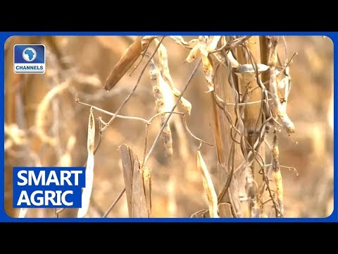 Focus On Smart Solutions To The Drought, Locust Challenge