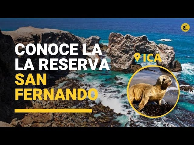 Ica: Conoce la belleza de la reserva San Fernando
