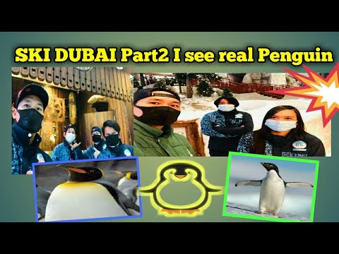 SKI DUBAI Part2 With real Penguin #Penguin #skidubai #MOE #trendingvideos
