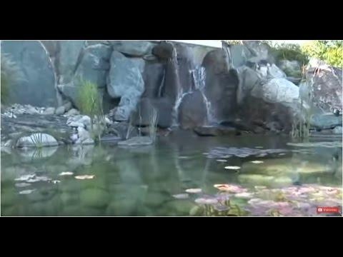 Construire une Piscine Naturelle : Etang de Baignade Paysagé