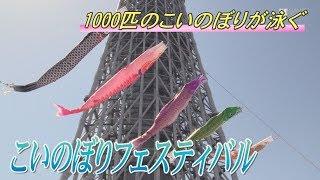 東京スカイツリータウンで4月13日、1000匹のこいのぼりが大空を群泳した...