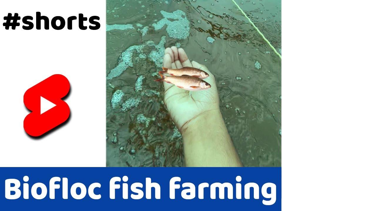 क्या है BIOFLOC?🐠 #SHORTS #INDIANFARMER #FARMING #FISH
