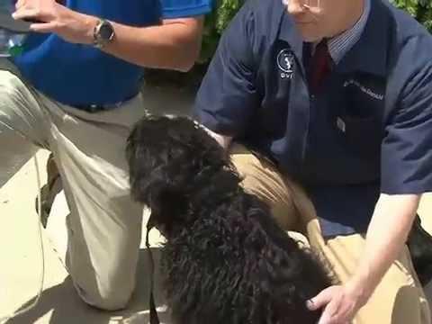 Fire Dept. Receives Life-Saving Pet Oxygen Masks