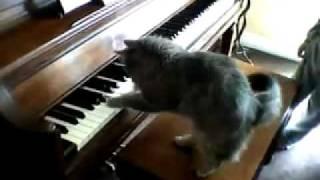 Кот виртуозно играет на пианино