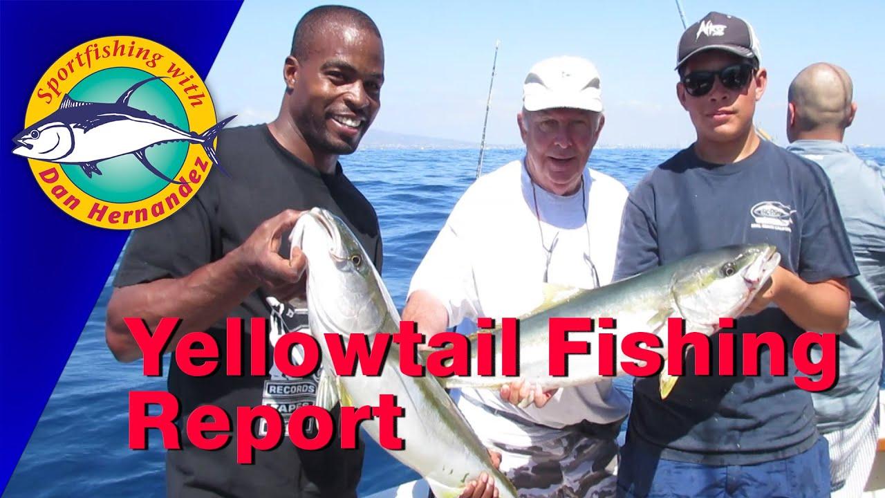 Yellowtail Trip Report With Dan Hernandez Sport Fishing