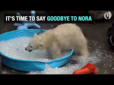 Nora the polar bear to leave the Oregon Zoo