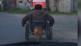 Watch how this loyal dog helps its disable master in wheelchair to move faster.