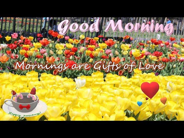 good morning video|whatsapp wishes|whatsapp status video|love status|New whatsapp status|romantic