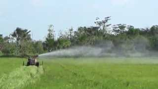 Spraying Paddy Bugs In Rice Field using a Canon Sprayer and Double Rear Iron Wheels