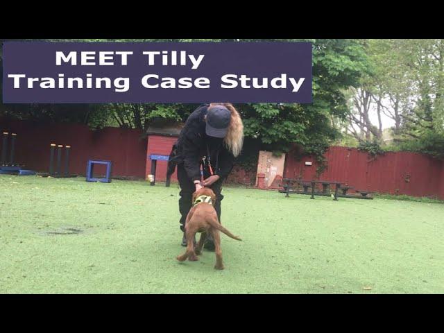 Tilly case study