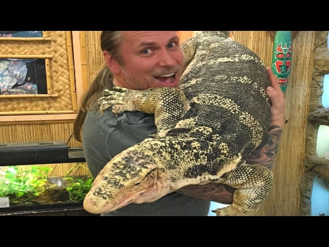 LARGEST LIZARD IN THE WORLD!! SnakeBytesTV