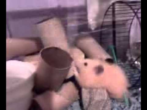 hamster adult tubes teen wrestling sex